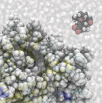 Tamiflu approaches the active site of the flu enzyme neuraminidase